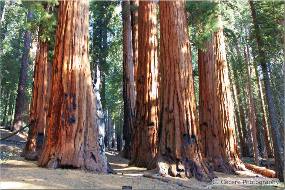 sequoiaI